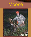 moose hunting guides maine, maine hunting guides, moose hunting guides, moose hunts